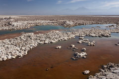 atacama chaxa智利沙漠盐水湖 库存照片