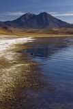 Atacama Desert - Altiplanic Lagoon - Chile. Altiplanic Lagoon in the high Andes Mountains in the Atacama Desert in Northern Chile Royalty Free Stock Photos