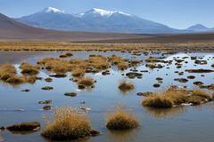 Atacama Desert - Chile. A small lagoon high in the Andes Mountains on the altiplano in the Atacama Desert in northern Chile Royalty Free Stock Images