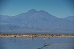 Atacama desert - Chile royalty free stock photo