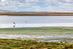 Atacama desert, Chile. CHILE, San Pedro de Atacama: Atacama Desert Stock Images