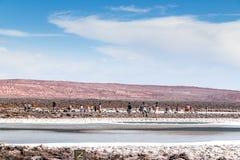 Atacama desert, Chile. CHILE, San Pedro de Atacama: Atacama Desert Stock Photos