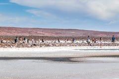 Atacama desert, Chile. CHILE, San Pedro de Atacama: Atacama Desert Stock Photo