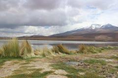 Atacama Desert Laguna Capina Royalty Free Stock Photography