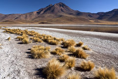 Atacama Desert in Northern Chile. Laguna Miscanti and the Miniques Volcano (5910m) in the High Andes Mountains in the Atacama Desert in Northern Chile Royalty Free Stock Photo