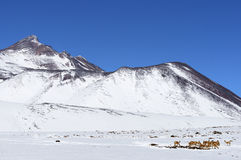 Atacama desert under snow. Royalty Free Stock Photography