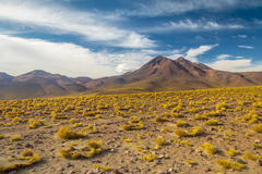 Atacama Desert vegetation and mountains Stock Photos