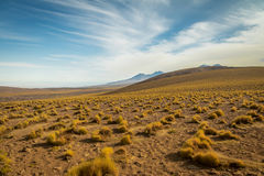 Atacama Desert vegetation and mountains - Chile. Atacama Desert vegetation and mountains in Chile Stock Images