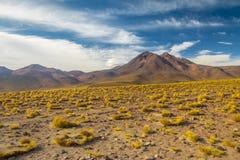 Atacama pustyni góry i roślinność Zdjęcia Stock