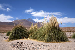 atacama pustyni oaza Obraz Stock