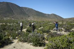 15-08-2017 Atacama pustynia, Chile Kwiatonośna pustynia 2017 Obraz Royalty Free