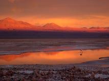 Atacama `s zmierzch - osamotniony flaming Obrazy Stock