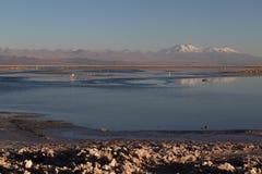 Atacama Salt Lake Stock Afbeeldingen