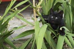 Atacking Kätzchen Lizenzfreie Stockfotos