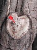 Atajo en forma de corazón de la rama de árbol en blanco y negro con un dardo rojo Imagenes de archivo