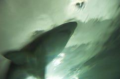atak rekina Zdjęcia Stock
