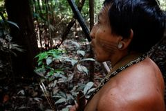 Tribal elder Binan Tukum hunting with his son for monkeys in the rainforest stock photography