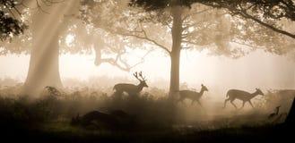 Ataque de los ciervos imagenes de archivo