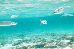 Ataque de los pescados Imagen de archivo libre de regalías