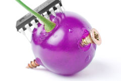 Ataque del GMO imagen de archivo libre de regalías