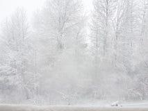 Ataque del invierno fotografía de archivo