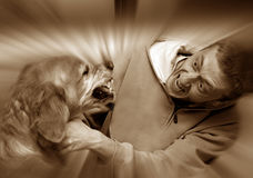 Ataque del perro Imagen de archivo