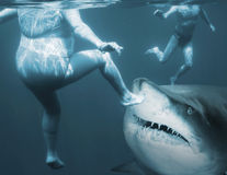 Ataque del tiburón foto de archivo libre de regalías