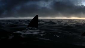 Ataque del tiburón en las imágenes de vídeo de la noche