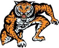 Ataque del tigre Imagen de archivo libre de regalías