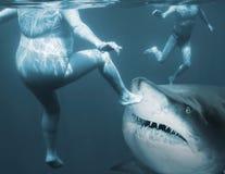 Ataque do tubarão Foto de Stock Royalty Free