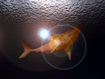Ataque do tubarão Fotografia de Stock
