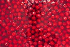 Atasco de cereza fresco rojo, apenas preparado Foto de archivo libre de regalías