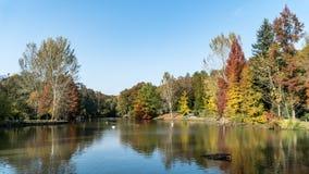 Ataturk Arboretum botanic park on Autumn, Istanbul. Ataturk Arboretum on Autumn and colorful tree`s reflection Royalty Free Stock Images