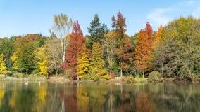 Ataturk Arboretum botanic park on Autumn, Istanbul. Ataturk Arboretum on Autumn and colorful tree`s reflection Royalty Free Stock Photography