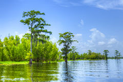 Atchafalaya stock photography