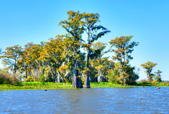 Atchafalaya royalty free stock photography