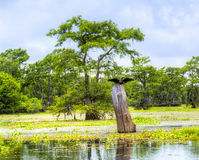 Atchafalaya royalty free stock images