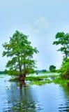 Atchafalayarivier stock afbeeldingen