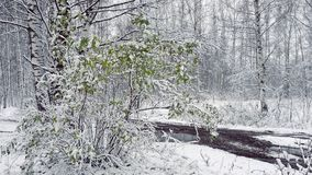 Ate Autumn, la première neige en parc et feuillage plus vert photographie stock libre de droits