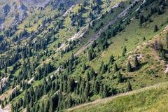 Ate s'étendant au soleil sur le flanc de montagne photographie stock libre de droits