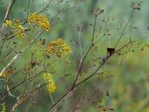Atem des Herbstes lizenzfreies stockfoto