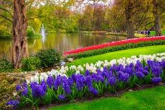 Atemberaubende bunte frische Tulpen in Keukenhof parken, die Niederlande, Europa Stockfoto