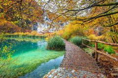 Atemberaubende touristische Bahn im bunten Herbstwald, Plitvice Seen, Kroatien Lizenzfreie Stockfotografie