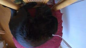 Atenção de tiragem do gato filme