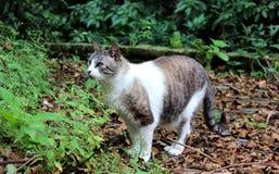 Atenção do gato Imagem de Stock
