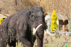 Atenas, Grécia 17 de janeiro de 2016 O Mammoth da idade avançada modela no parque dos dinossauros em Grécia Fotos de Stock