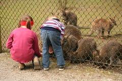 Atención del parque zoológico Imagen de archivo