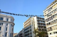 Atene, Grecia: Piccioni che si siedono sui cavi elettrici in una via del centro di Atene, Grecia immagini stock
