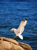 Aterragem Imagem de Stock