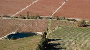 Aterre com a colheita agrícola antes de escolher a colheita no outono, Pisco Elqui, o Chile foto de stock